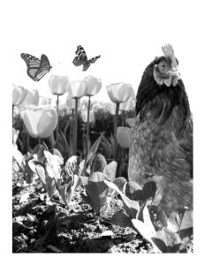 Oakhurst Garden Pamphlet 3